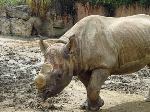 天王寺動物園 5