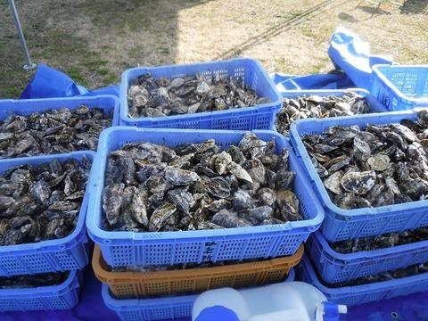 牡蠣まつり 4