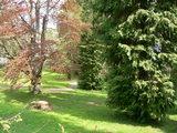 敷地内の庭