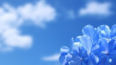 Blue-Flower-Vs-Blue-Sky
