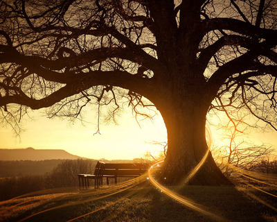 awesome-alone-tree-wish-desktop