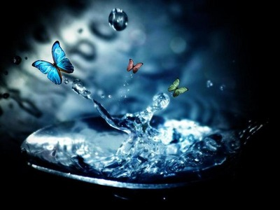 Butterflies_wallpapers_267