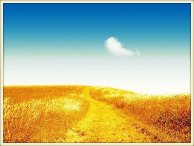 fields_of_gold_2