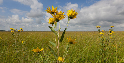 spring-prairie-preserve