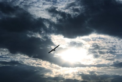 bird_silhouetted_against_cloudy_sky