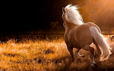 Horses_wallpapers_204