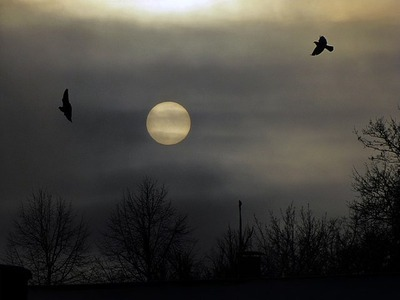 two_crows_by_purplescarecrow-d395c5e