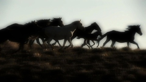 Wild-Horses-run-