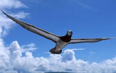 fly_bird_69303-1920x1200