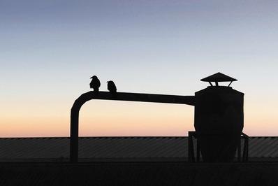 2-crows-sun-gazing-postcard-version-1a
