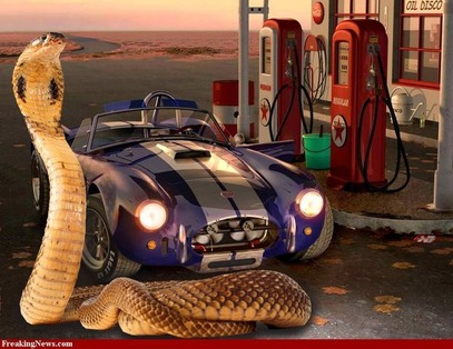 Shelby-Cobra-Car-34693