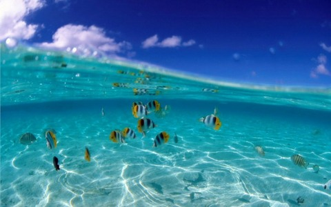 Fish_wallpapers_147