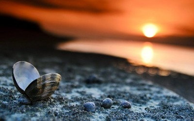 Beach-Sunset-Landscape-Shells-Wallpaper-2016