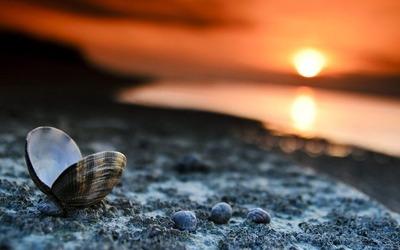 Beach-Sunset-Landscape-Shells-Wallpaper-2016