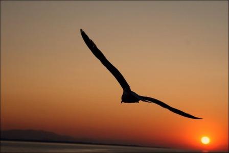 bird_and_night_sky_by_vercahasli-d5erayx