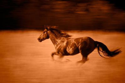 38_1wild_horses_copper_04