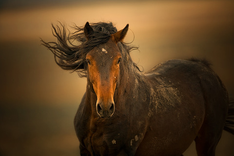 69_1wild_horses_vibrance_04