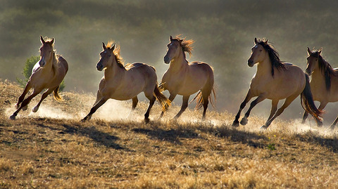 wildhorsesphoto