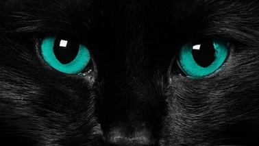 black-cat-bliue-eyes-cat-wallpaper-1600x900