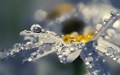 234049__petals-drops-dew-flower-daisy-shine-shine-macro_p