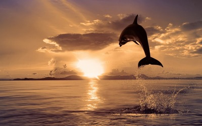 Dolphin-Sea-Sunset