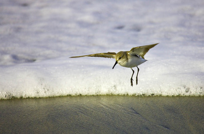 Sea_and_Shore_Birds_jpg_Neon_Sky063-1