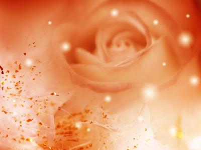 Orange-Roses-flowers-34611341-1600-1200