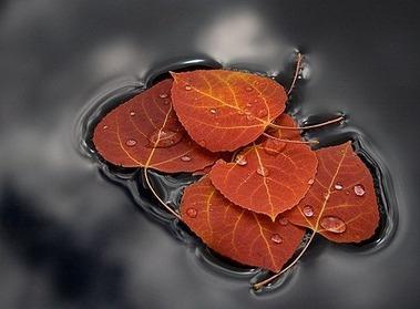 agua-autumn-autumn-float-beautiful-color-colour-Favim_com-37711