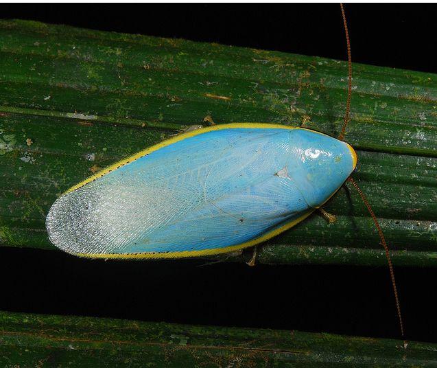 超美しいゴキブリが激写される_画像_000