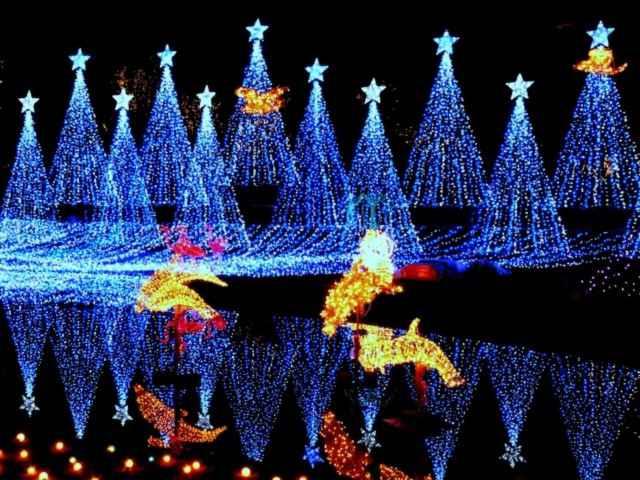 【画像あり】クリスマス前だしイルミネーション画像集めようぜwww_画像_001