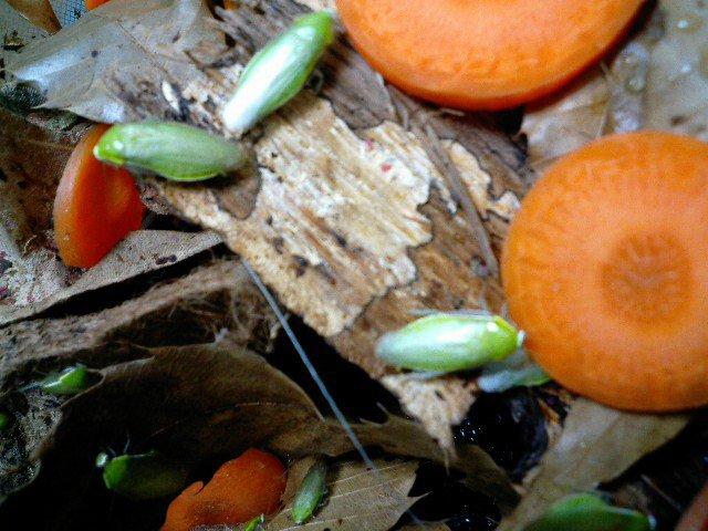 超美しいゴキブリが激写される_画像_001