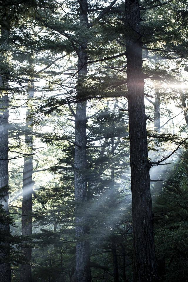 木洩れ日_1