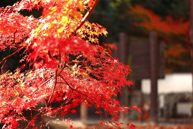 宝福寺_MG_7980
