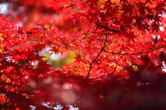 宝福寺_MG_7983