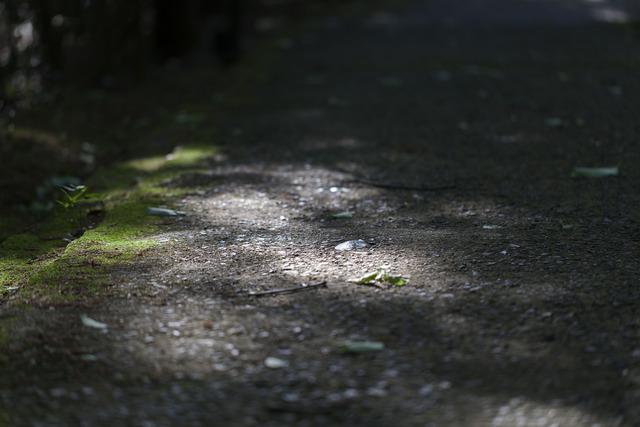 木漏れ日_4744
