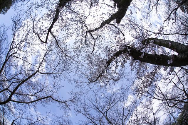 桜1607