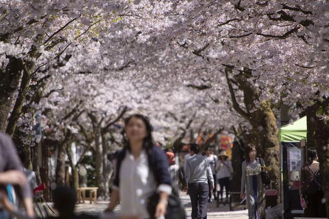 桜408A1783