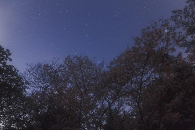 桜_MG_8590