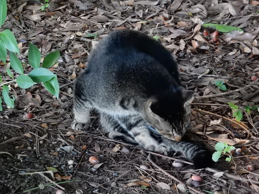 cat_20150922_12