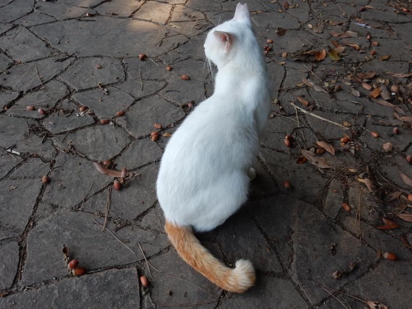cat_20150922_20