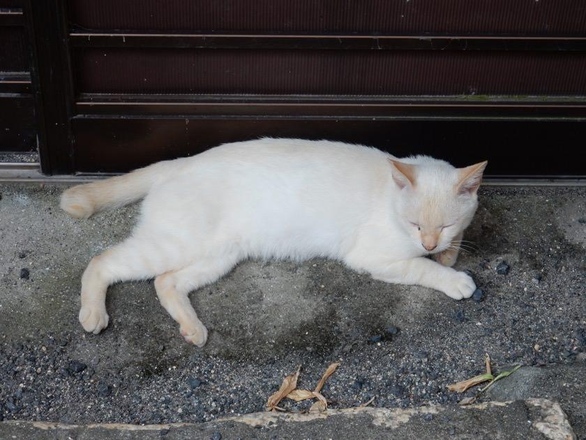 cat_20160813_09