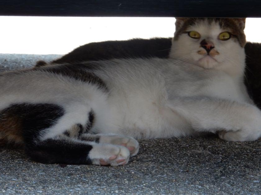 cat_20160813_04