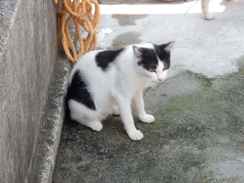 cat_20160813_08