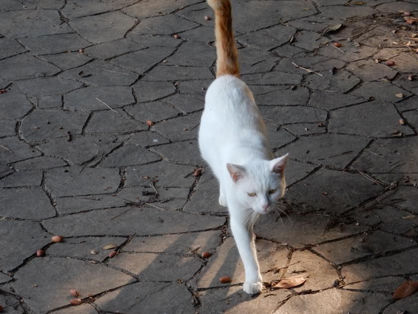 cat_20150922_18