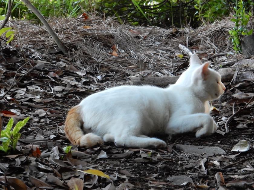 cat_20150922_15
