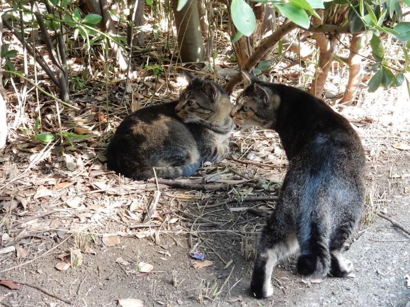 cat_20150922_13