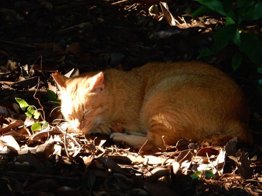 cat_20150922_04