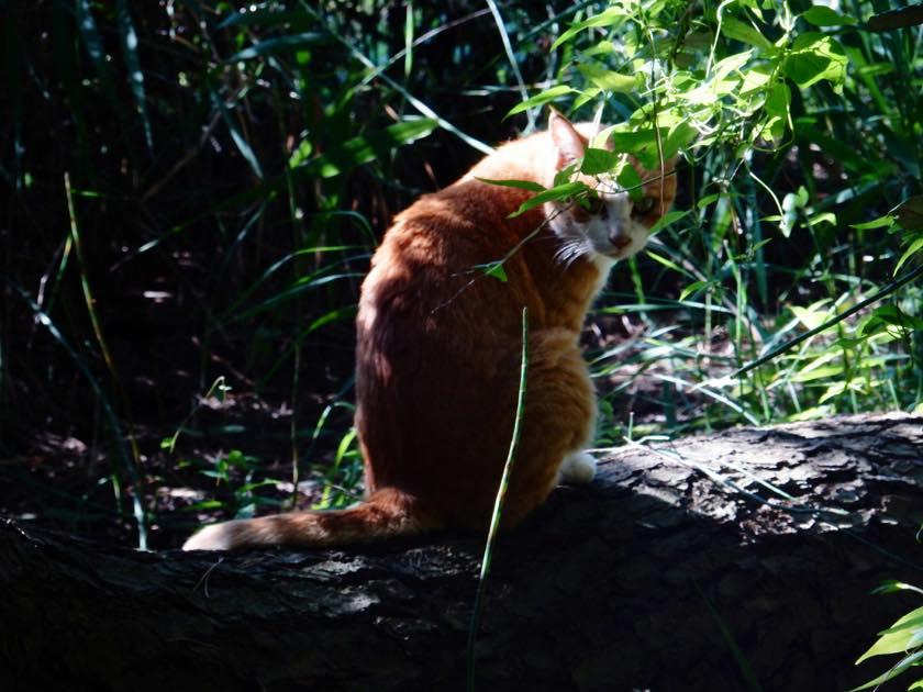 cat_20150922_01