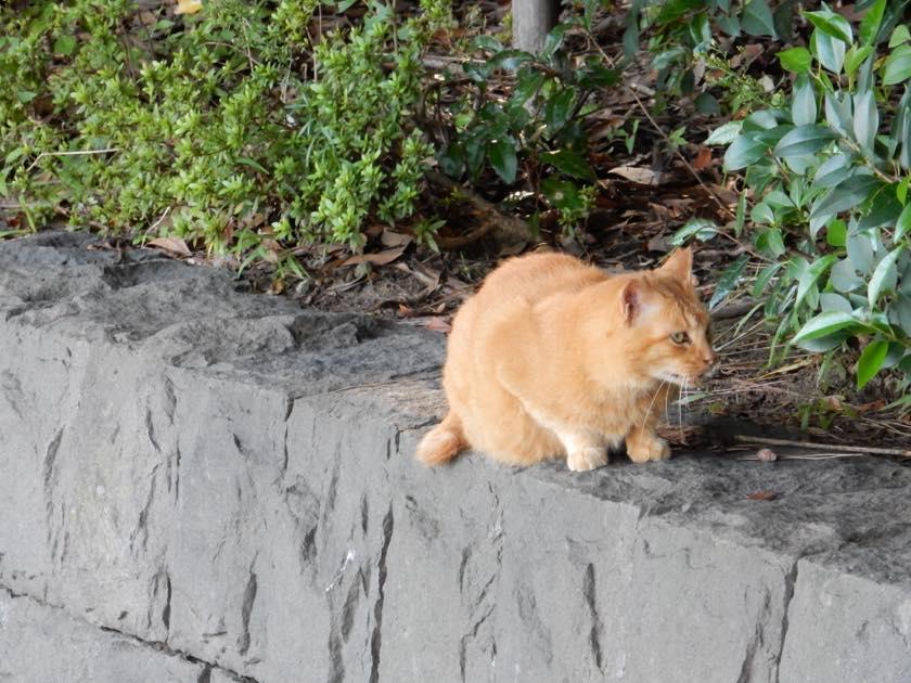 cat_20150922_05