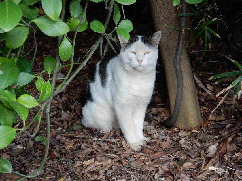 cat_20150922_07